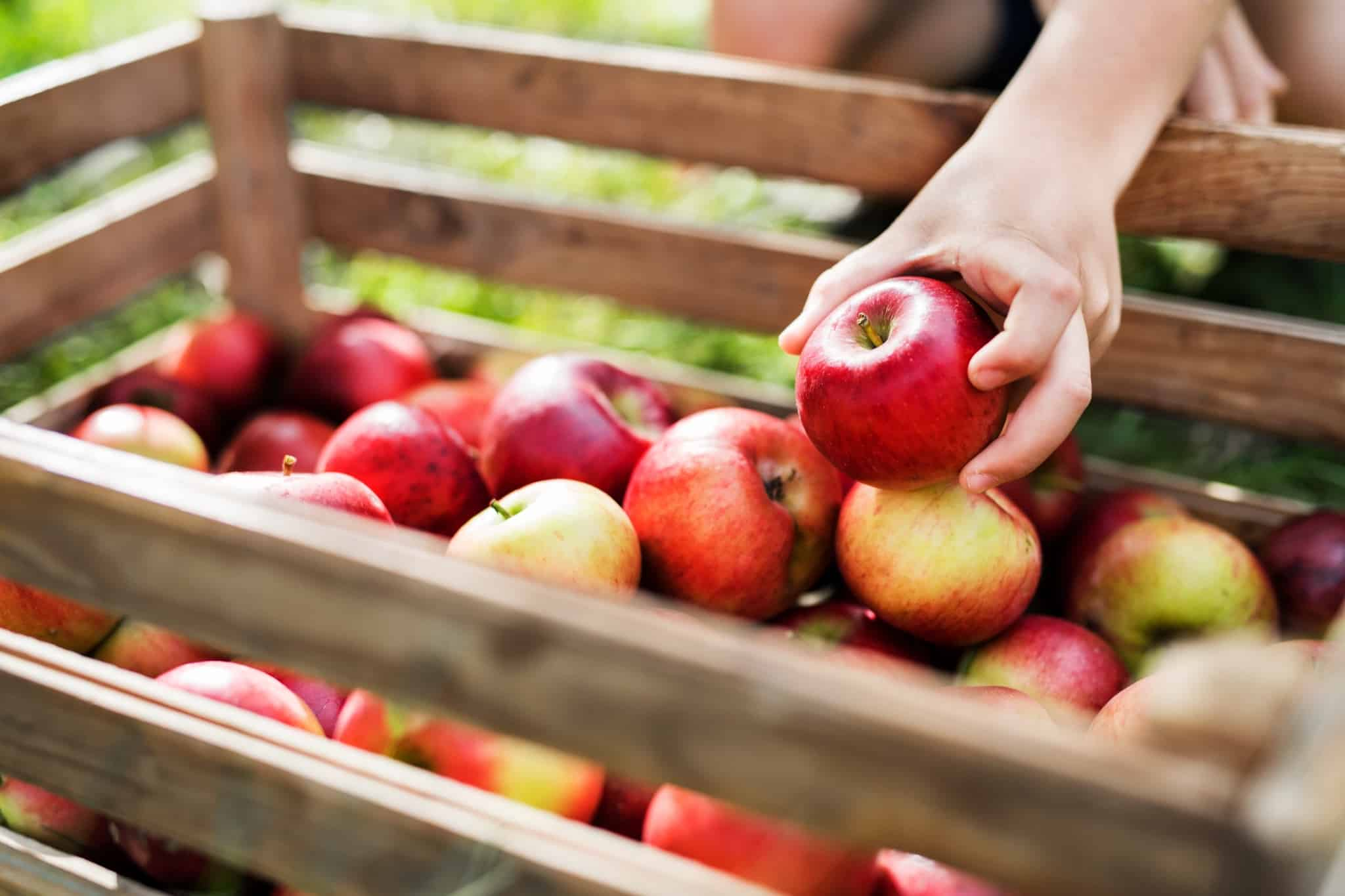 Holzkiste mit frischen roten Äpfeln