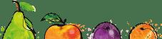 Birne, Apfel, Plaume und Orange im Anschnitt als Illustration