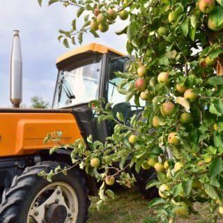 Ein oranger Traktor steht neben einem Apfelbaum